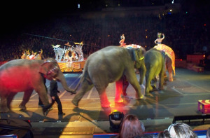 Jim Stafford of Eclipse Recording Company at the Circus