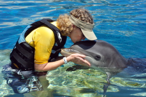 Dolphin Kissing